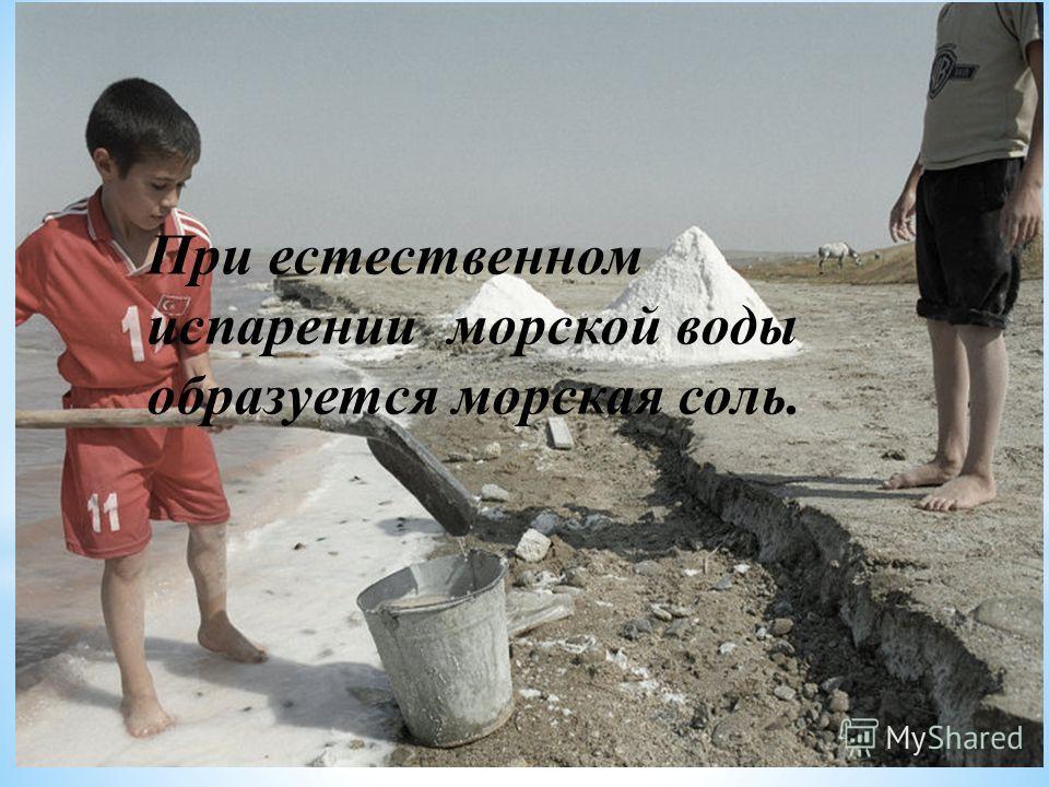Соль добывается: При естественном испарении морской воды образуется морская соль.