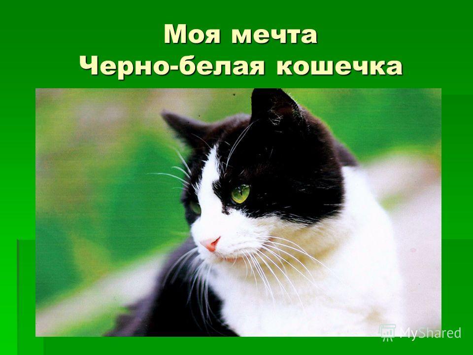 Моя мечта Черно-белая кошечка