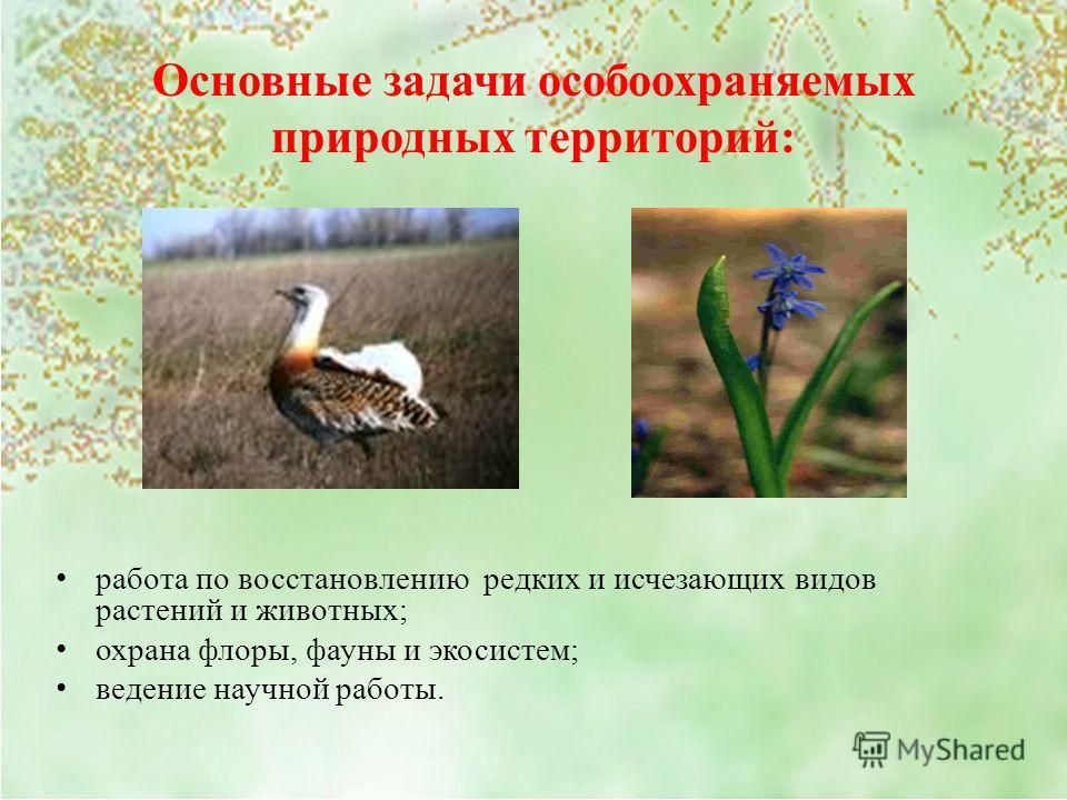 Основные задачи особо охраняемых природных территорий: работа по восстановлению редких и исчезающих видов растений и животных; охрана флоры, фауны и экосистем; ведение научной работы.