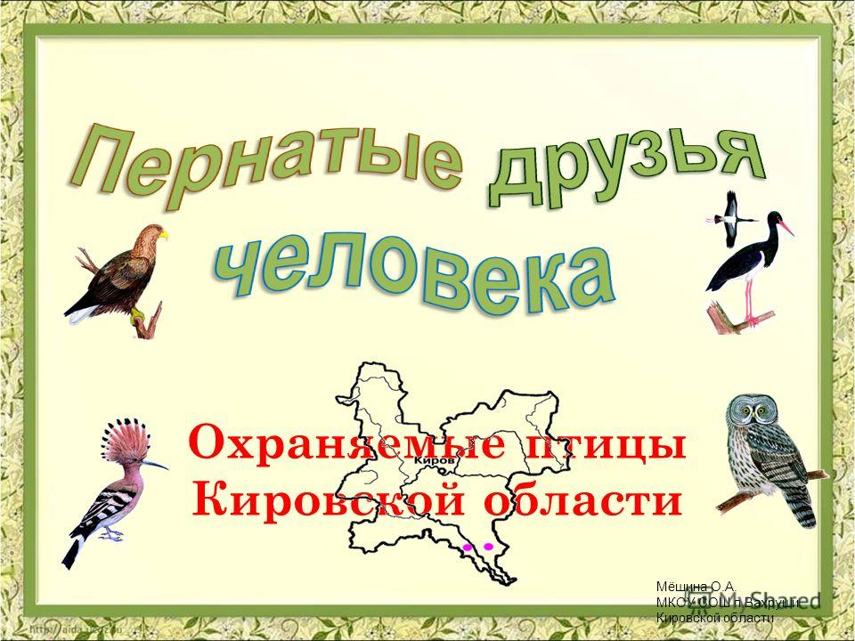 Охраняемые птицы Кировской области Мёшина О.А. МКОУ СОШ п.Вахруши Кировской области