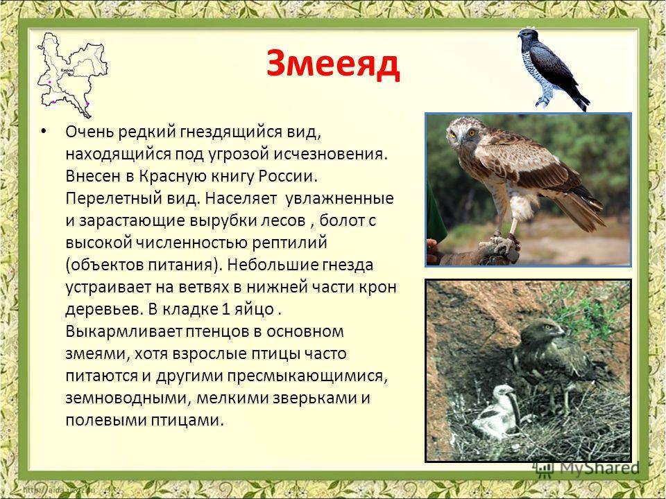 Змееяд Очень редкий гнездящийся вид, находящийся под угрозой исчезновения. Внесен в Красную книгу России. Перелетный вид. Населяет увлажненные и зарастающие вырубки лесов, болот с высокой численностью рептилий (объектов питания). Небольшие гнезда уст