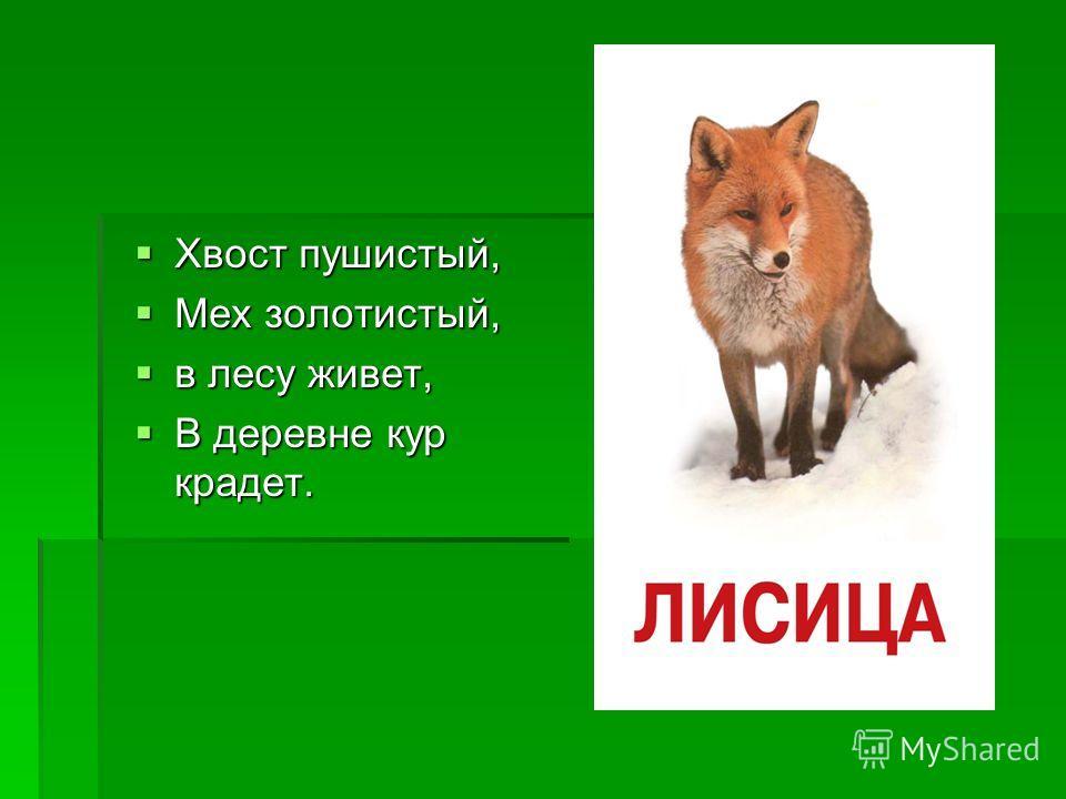 Хвост пушистый, Хвост пушистый, Мех золотистый, Мех золотистый, в лесу живет, в лесу живет, В деревне кур крадет. В деревне кур крадет.