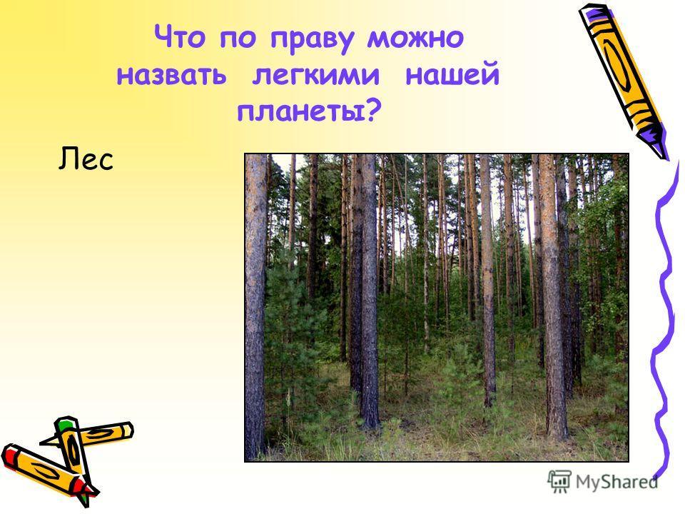 Что по праву можно назвать легкими нашей планеты? Лес