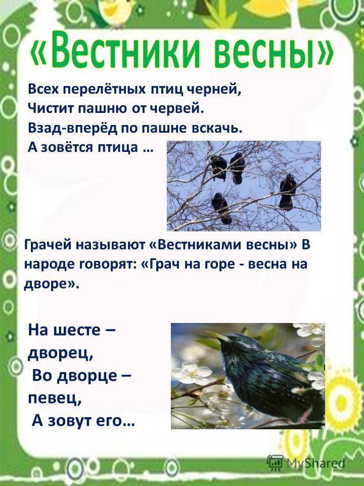 Всех перелётных птиц черней, Чистит пашню от червей. Взад-вперёд по пашне вскачь. А зовётся птица … Грачей называют «Вестниками весны» В народе говорят: «Грач на горе - весна на дворе». На шесте – дворец, Во дворце – певец, А зовут его…