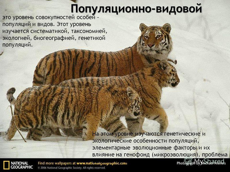 Популяционно-видовой это уровень совокупностей особей - популяций и видов. Этот уровень изучается систематикой, таксономией, экологией, биогеографией, генетикой популяций. На этом уровне изучаются генетические и экологические особенности популяций, э