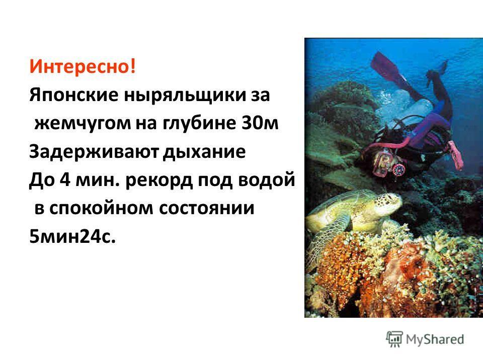 Интересно! Японские ныряльщики за жемчугом на глубине 30 м Задерживают дыхание До 4 мин. рекорд под водой в спокойном состоянии 5 мин 24 с.