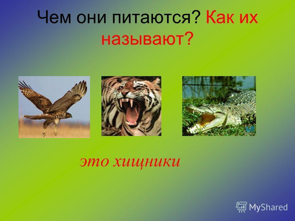 Как вы думаете, что объединяет этих абсолютно разных животных? это растительноядные животные