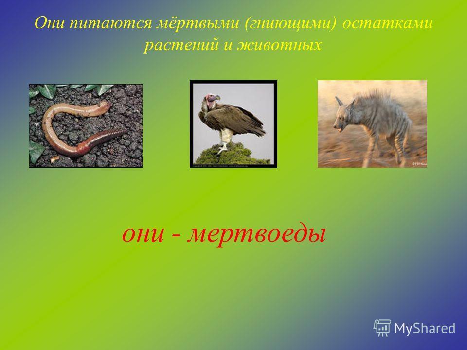 Они питаются как растениями, так и животными. Как их называют? они – всеядные