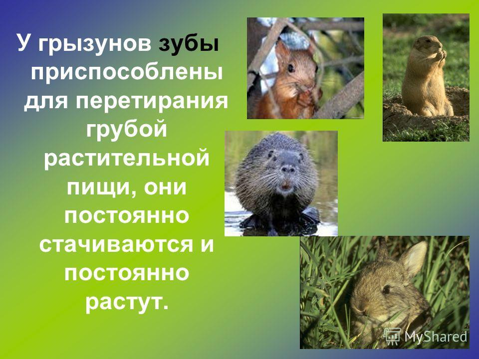 Как питаются разные животные? Зубы есть не только у человека, но и у многих животных.