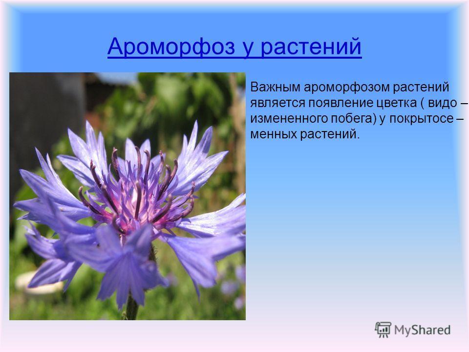 Ароморфоз у растений Важным ароморфозом растений является появление цветка ( видео – измененного побега) у покрытосеменных растений.