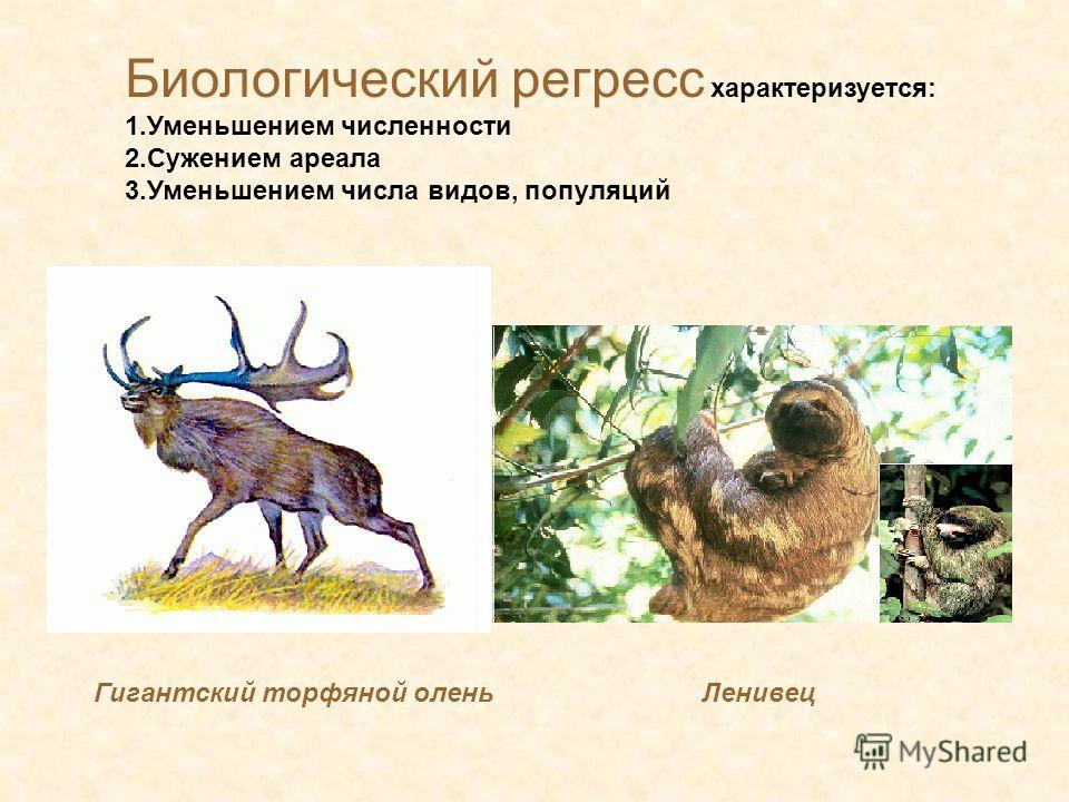 Биологический регресс характеризуется: 1. Уменьшением численности 2. Сужением ареала 3. Уменьшением числа видеов, популяций Гигантский торфяной олень Ленивец