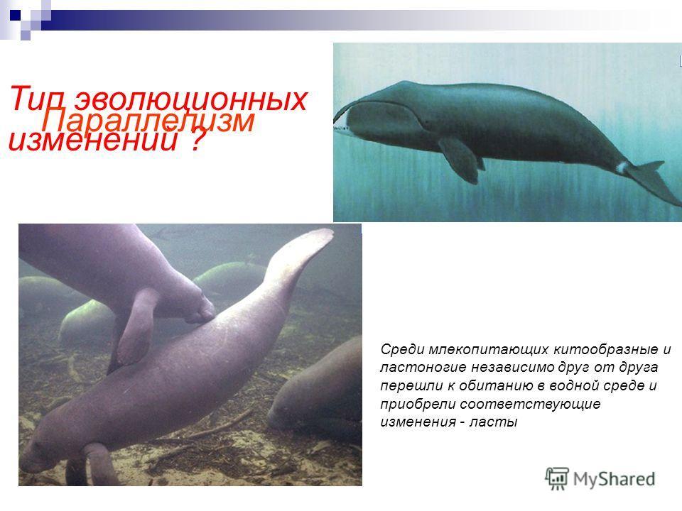 Тип эволюционных изменений ? Среди млекопитающих китообразные и ластоногие независимо друг от друга перешли к обитанию в водной среде и приобрели соответствующие изменения - ласты Параллелизм