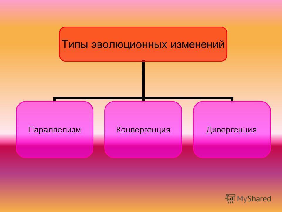 Типы эволюционных изменений Параллелизм КонвергенцияДивергенция