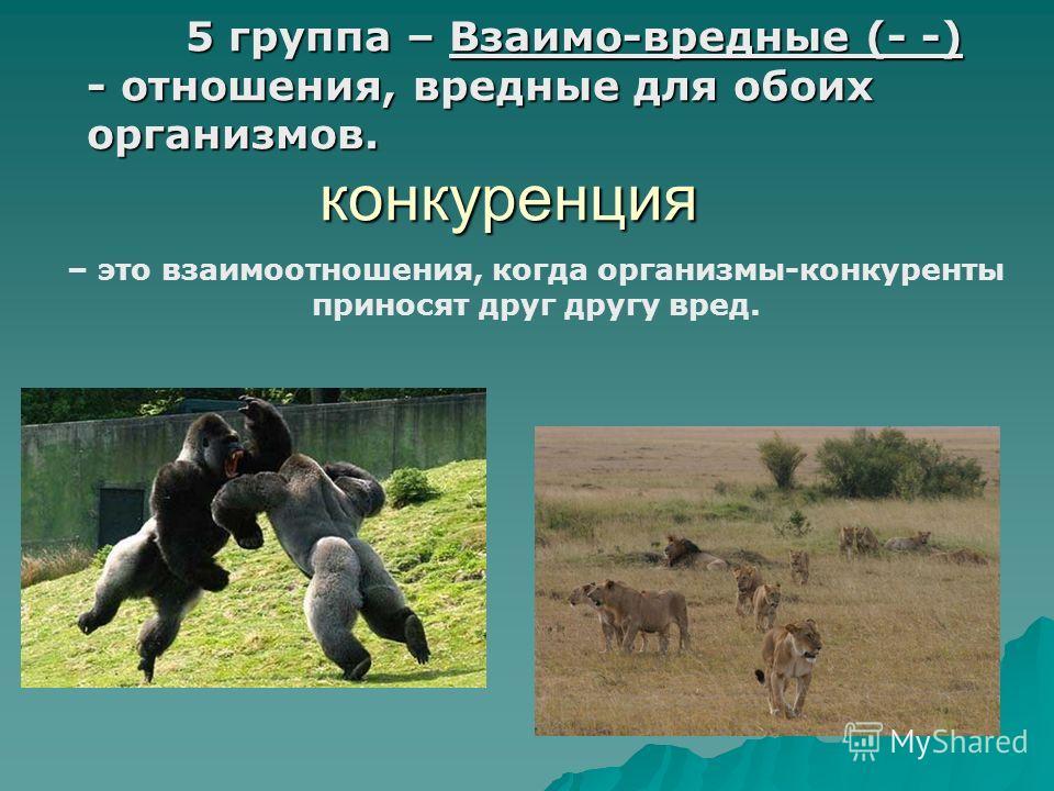 5 группа – Взаимо-вредные (- -) - отношения, вредные для обоих организмов. конкуренция 5 группа – Взаимо-вредные (- -) - отношения, вредные для обоих организмов. конкуренция – это взаимоотношения, когда организмы-конкуренты приносят друг другу вред.