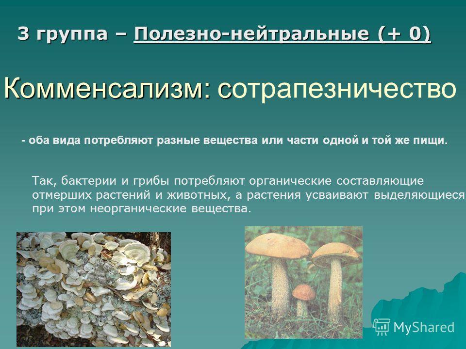 3 группа – Полезно-нейтральные (+ 0) Комменсализм: с Комменсализм: сотрапезничество - оба вида потребляют разные вещества или части одной и той же пищи. Так, бактерии и грибы потребляют органические составляющие отмерших растений и животных, а растен