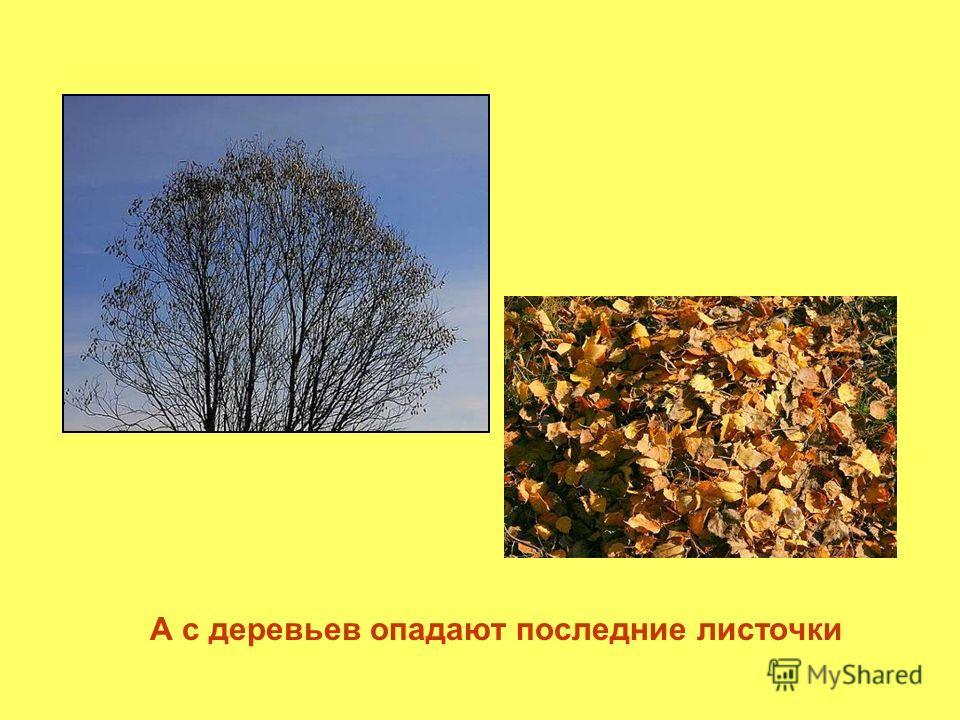 А с деревьев опадают последние листочки