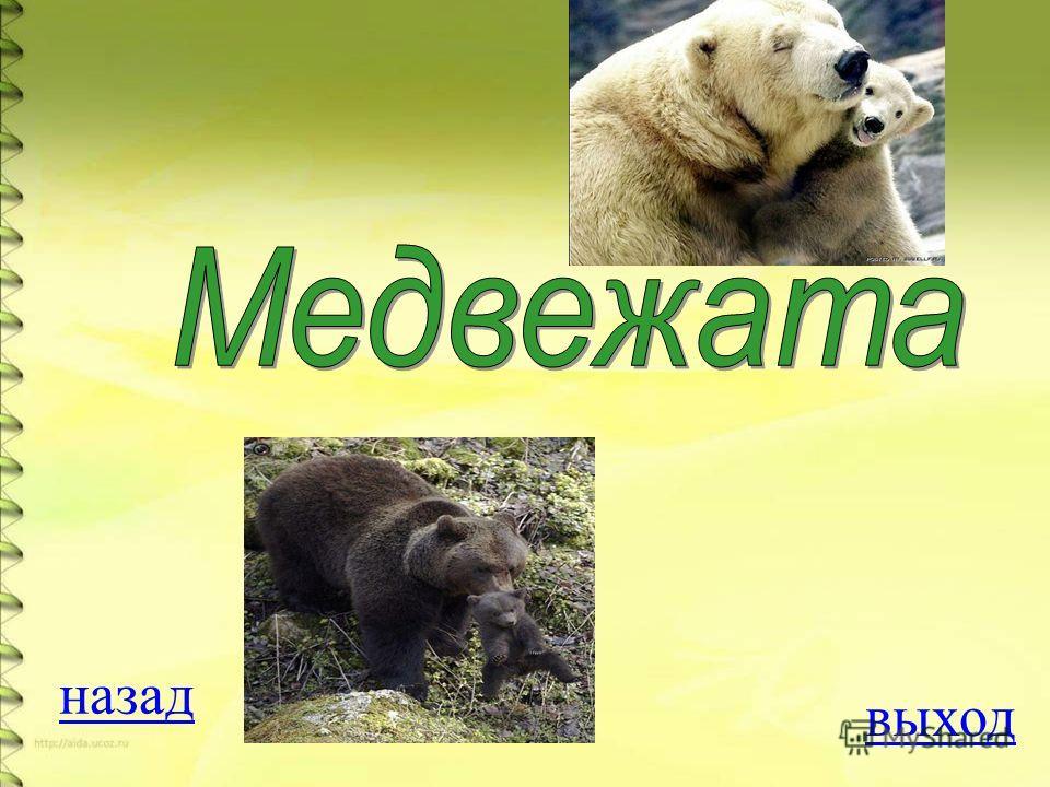 Вопрос на 500 баллов Что есть у медведей, чего нет у других животных? ОТВЕТ