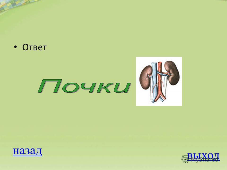 ОТВЕТ Вопрос на 100 баллов К дыхательной системе не относятся 1. Легкие 2. Почки 3. Бронхи 4.Альвеолы