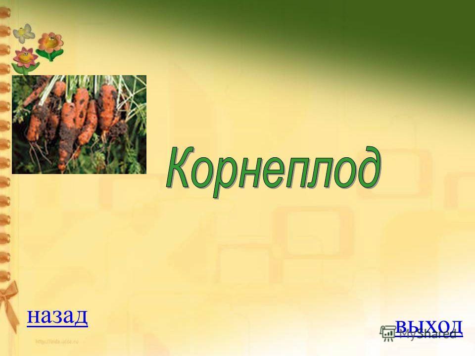 Вопрос на 100 баллов У моркови имеется: 1. корнеклубень 2. корневище 3. клубень 4. корнеплод ОТВЕТ