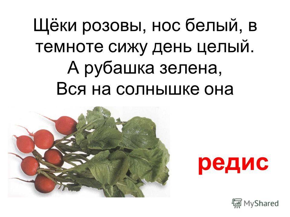 Мой зелененький листок завернулся в кулачок салат