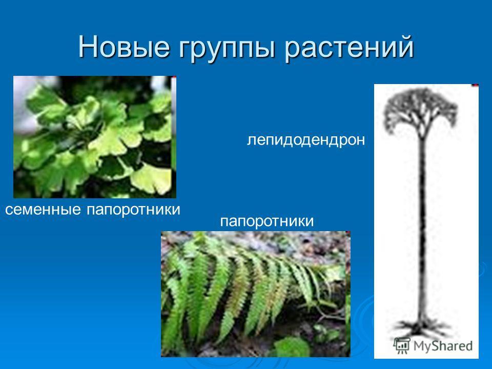 Новые группы растений семенные папоротники лепидодендрон папоротники