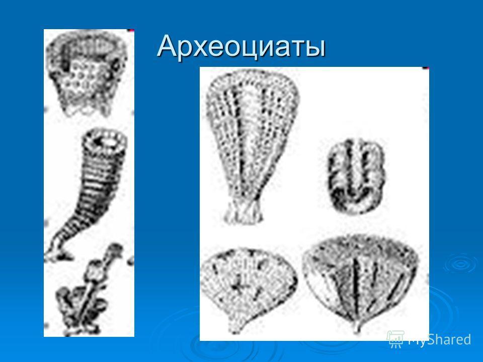 Археоциаты
