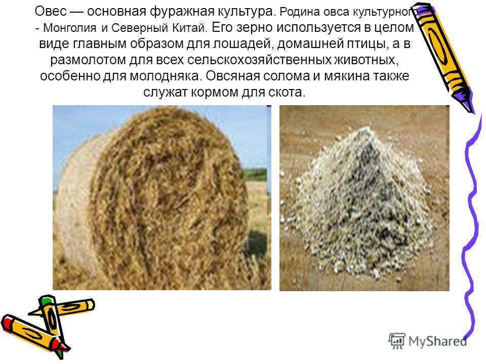 Овес основная фуражная культура. Родина овса культурного - Монголия и Северный Китай. Его зерно используется в целом виде главным образом для лошадей, домашней птицы, а в размолотом для всех сельскохозяйственных животных, особенно для молодняка. Овся