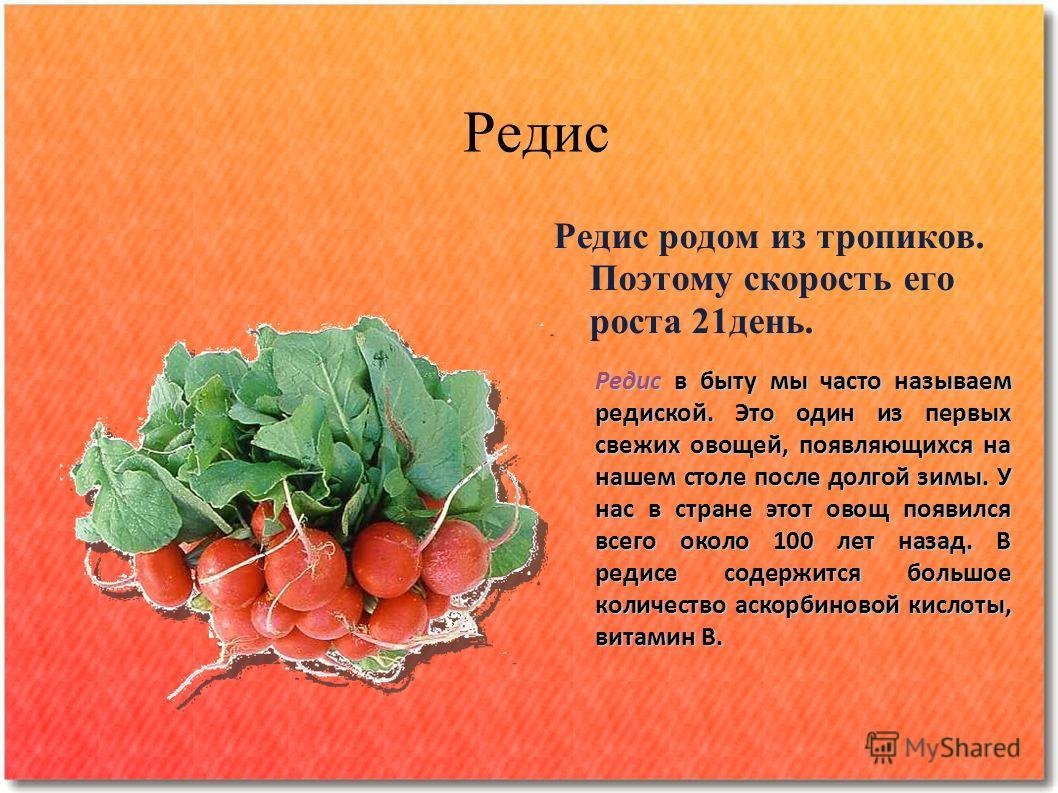 Редис Редис родом из тропиков. Поэтому скорость его роста 21 день. Редис в быту мы часто называем редиской. Это один из первых свежих овощей, появляющихся на нашем столе после долгой зимы. У нас в стране этот овощ появился всего около 100 лет назад.