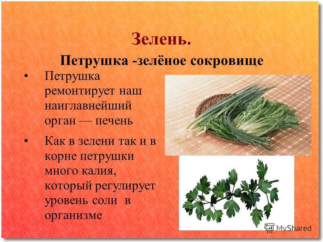 Зелень. Петрушка -зелёное сокровище Петрушка ремонтирует наш наиглавнейший орган печень Как в зелени так и в корне петрушки много калия, который регулирует уровень соли в организме