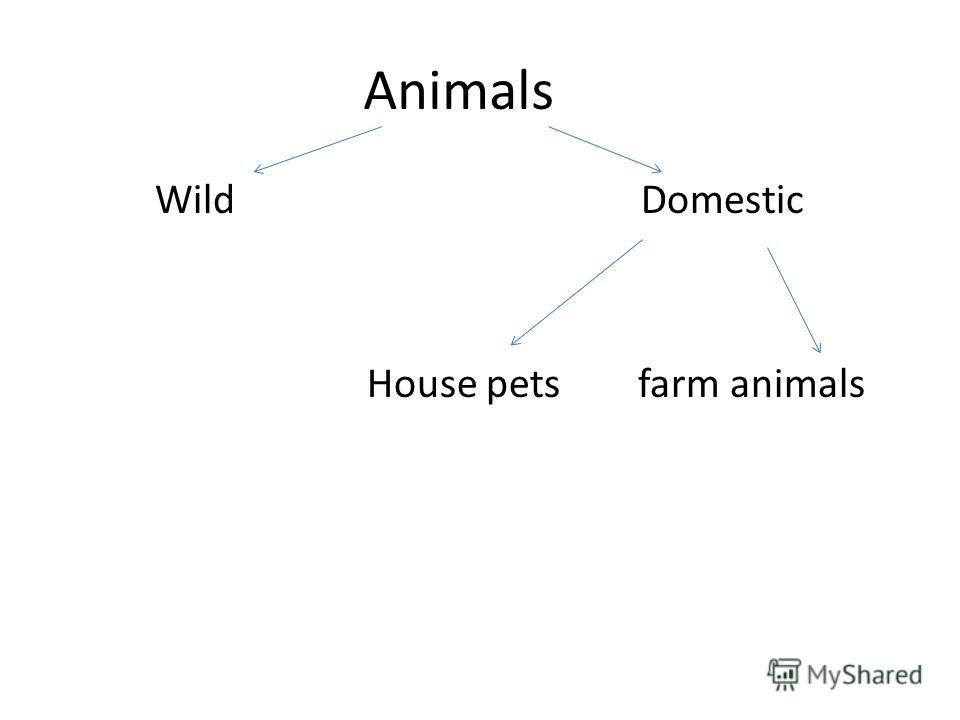 Animals Wild Domestic House pets farm animals