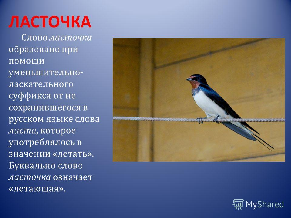 КУРОПАТКА Слово куропатка образовано путём сложения двух слов: кура – «курица» и пита – «птица».