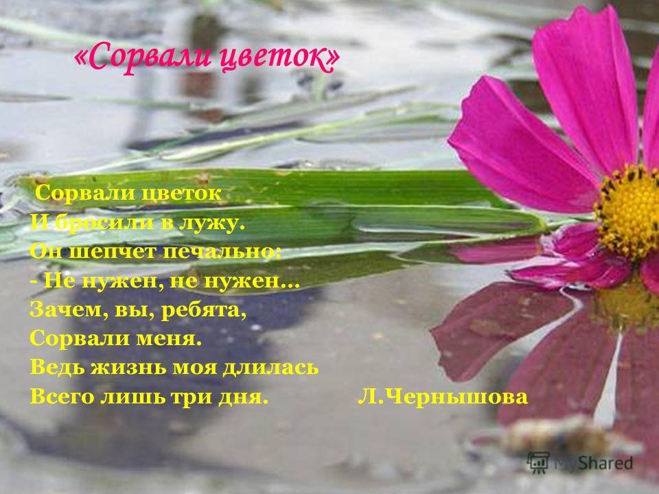 «Сорвали цветок» Сорвали цветок И бросили в лужу. Он шепчет печально: - Не нужен, не нужен… Зачем, вы, ребята, Сорвали меня. Ведь жизнь моя длилась Всего лишь три дня. Л.Чернышова