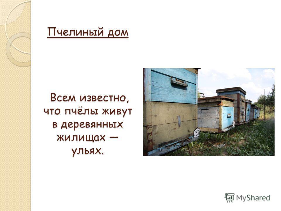 Пчелиный дом Всем известно, что пчёлы живут в деревянных жилищах ульях.