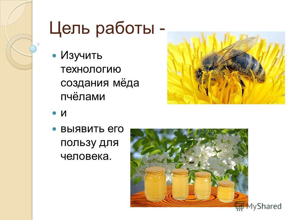 Цель работы - Изучить технологию создания мёда пчёлами и выявить его пользу для человека.