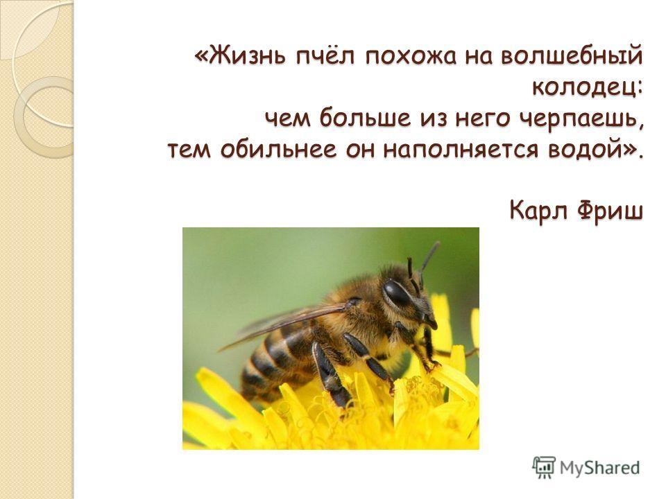 Скачать звук пчела