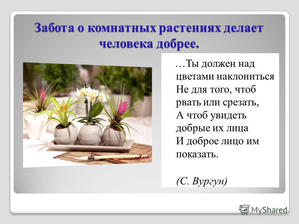 Забота о комнатных растениях делает человека добрее. …Ты должен над цветами наклониться Не для того, чтоб рвать или срезать, А чтоб увидеть добрые их лица И доброе лицо им показать. (С. Вургун)