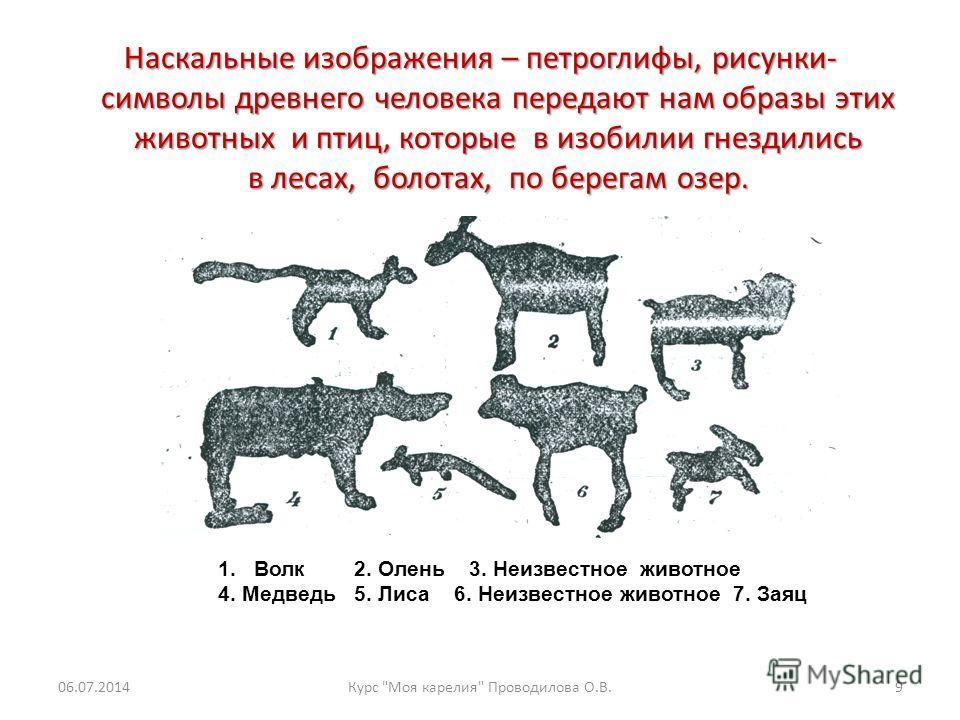 Наскальные изображения – петроглифы, рисунки- символы древнего человека передают нам образы этих животных и птиц, которые в изобилии гнездились в лесах, болотах, по берегам озер. 1. Волк 2. Олень 3. Неизвестное животное 4. Медведь 5. Лиса 6. Неизвест