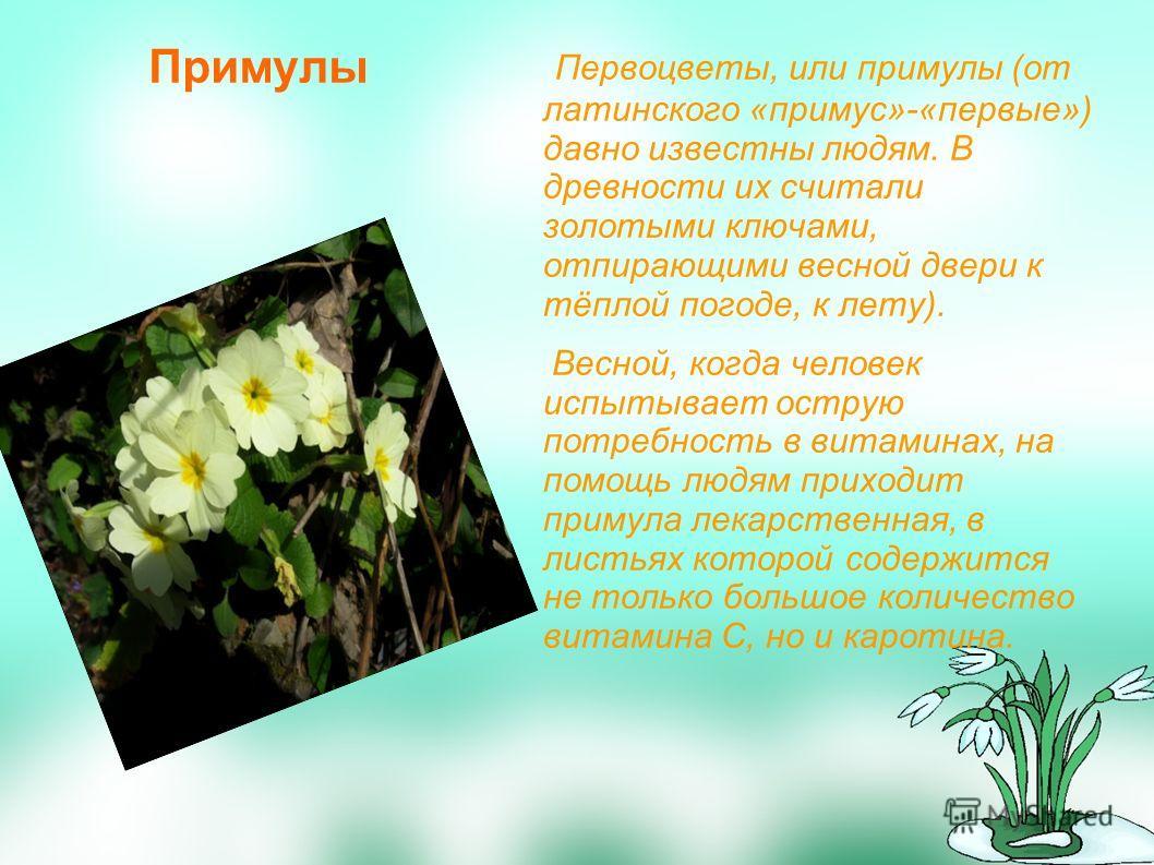 Примулы Первоцветы, или примулы (от латинского «примус»-«первые») давно известны людям. В древности их считали золотыми ключами, отпирающими весной двери к тёплой погоде, к лету). Весной, когда человек испытывает острую потребность в витаминах, на по