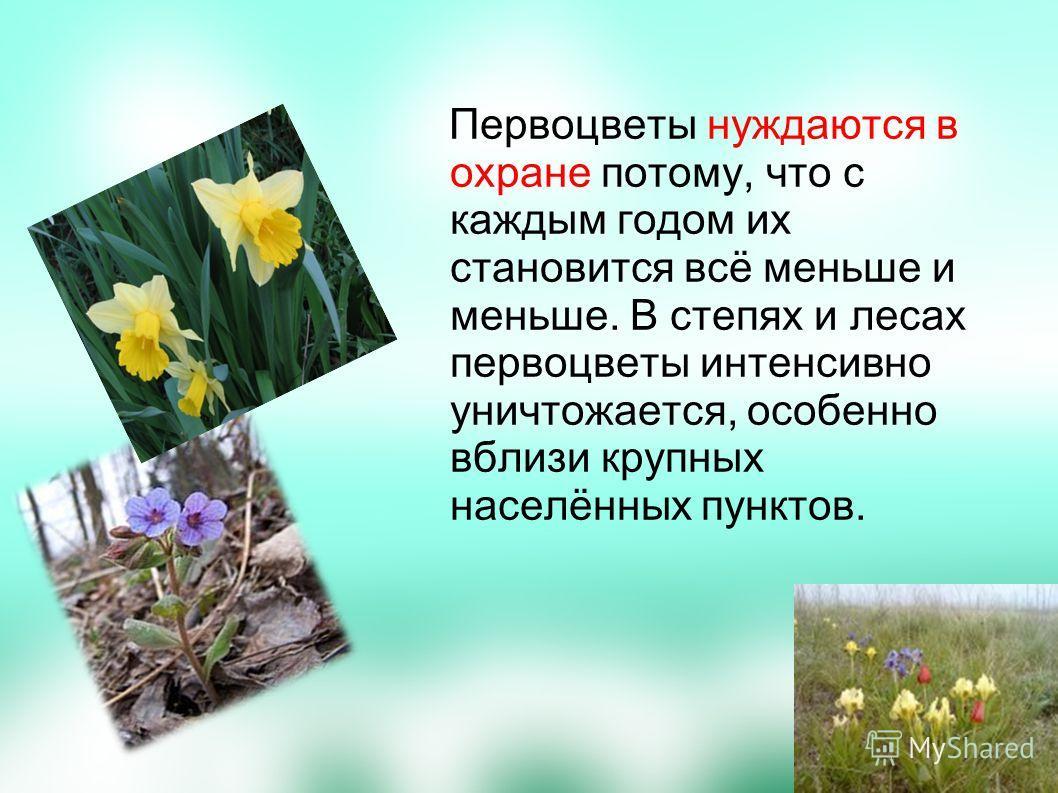 Первоцветы нуждаются в охране потому, что с каждым годом их становится всё меньше и меньше. В степях и лесах первоцветы интенсивно уничтожается, особенно вблизи крупных населённых пунктов.