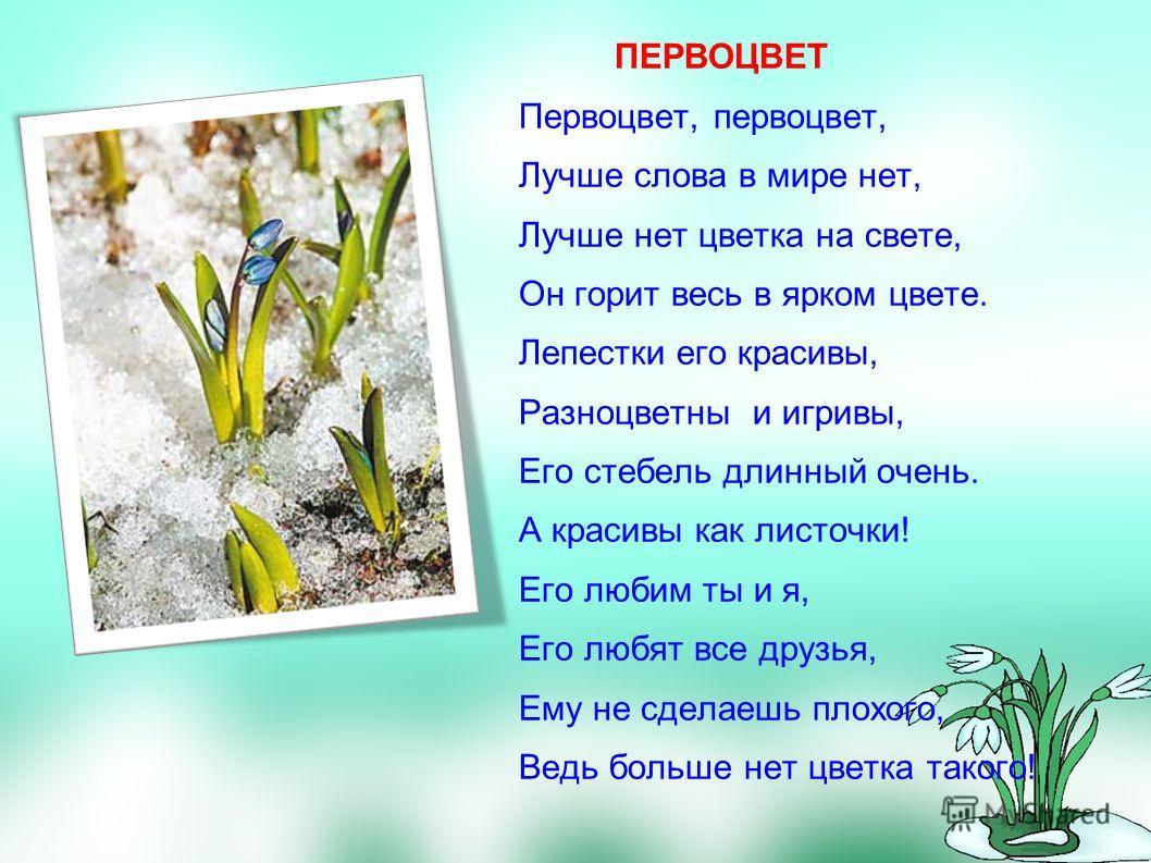 ПЕРВОЦВЕТ Первоцвет, первоцвет, Лучше слова в мире нет, Лучше нет цветка на свете, Он горит весь в ярком цвете. Лепестки его красивы, Разноцветны и игривы, Его стебель длинный очень. А красивы как листочки! Его любим ты и я, Его любят все друзья, Ему