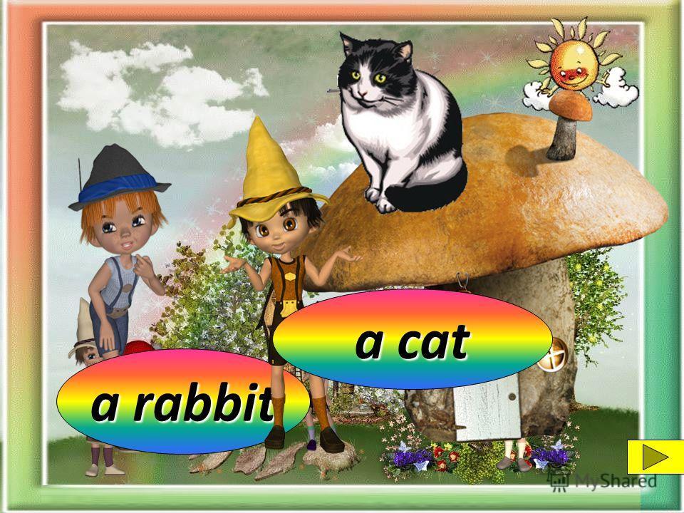 a rabbit a pig