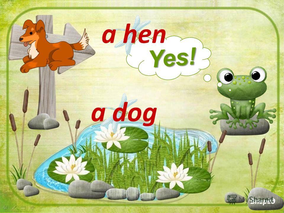 a hen Yes! a cat Вперёд