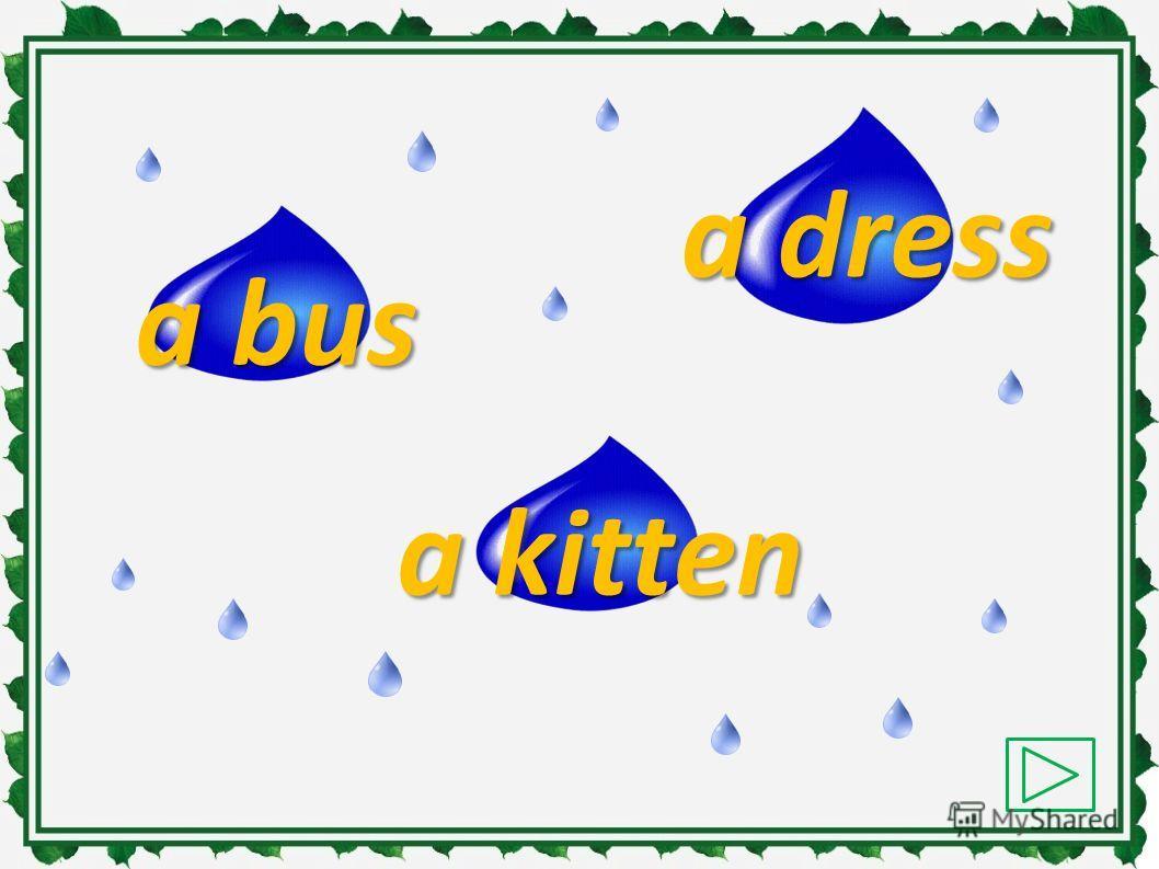 a pig a dress a cat