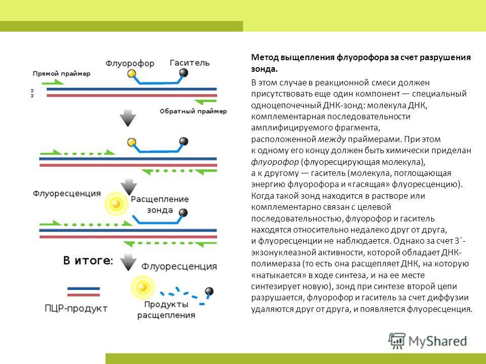 Метод выщепления флуорофора за счет разрушения зонда. В этом случае в реакционной смеси должен присутствовать еще один компонент специальный одноцепочечный ДНК-зонд: молекула ДНК, комплементарная последовательности амплифицируемого фрагмента, располо
