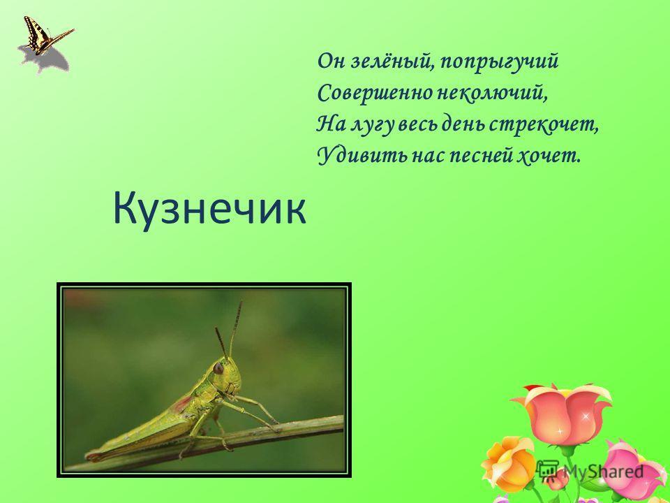 Он зелёный, попрыгучей Совершенно неколючий, На лугу весь день стрекочет, Удивить нас песней хочет. Кузнечик