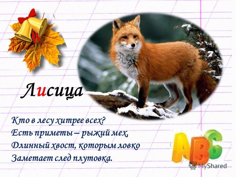 Лисица Кто в лесу хитрее всех? Есть приметы – рыжий мех, Длинный хвост, которым ловко Заметает след плутовка.