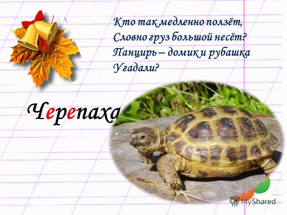 Черепаха Кто так медленно ползёт, Словно груз большой несёт? Панцирь – домик и рубашка Угадали?