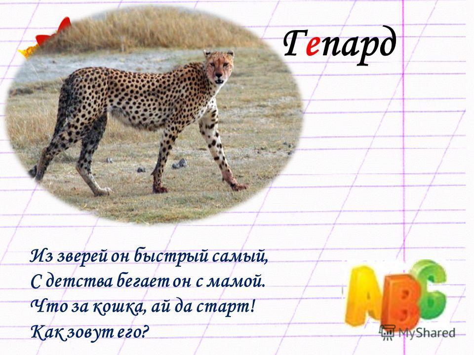 Гепард Из зверей он быстрый самый, С детства бегает он с мамой. Что за кошка, ай да старт! Как зовут его?