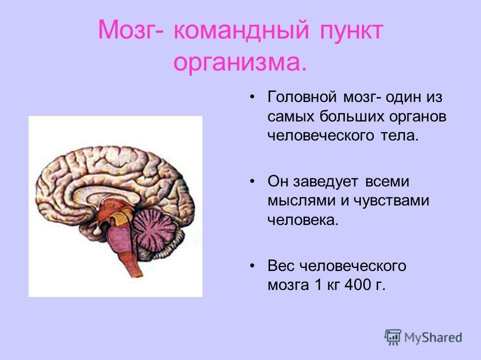 Мозг- командный пункт организма. Головной мозг- один из самых больших органов человеческого тела. Он заведует всеми мыслями и чувствами человека. Вес человеческого мозга 1 кг 400 г.