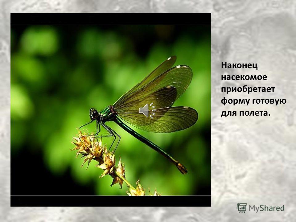 После того, как новый организм покинул старое тело, стрекоза сидит высыхает, а потом начинает испытывать лапки и крылья. Лапки складывает и вытягивает, крылья поднимает и опускает.